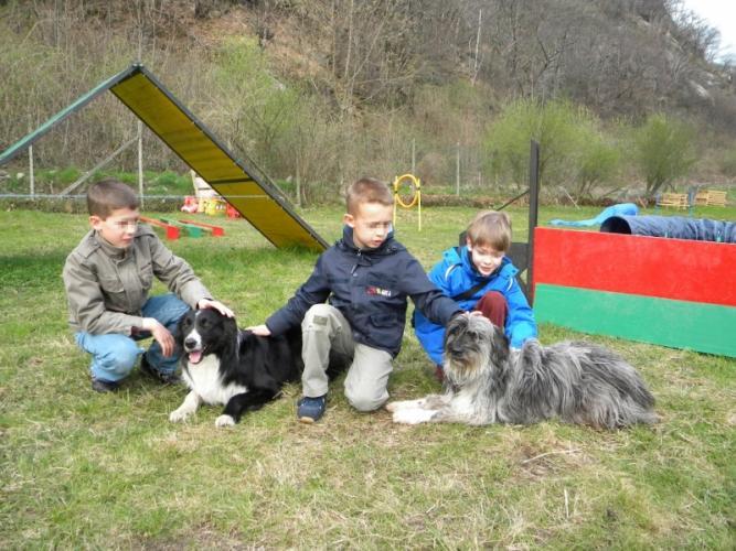 Agility dog e animal friends